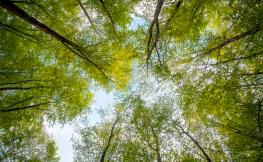 Plano nadir arbres d'un bosc